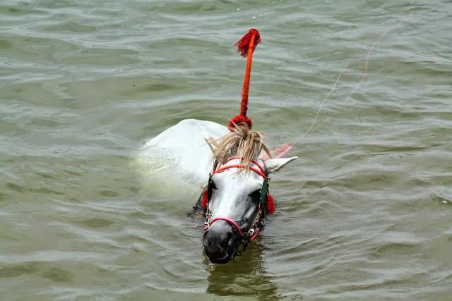 Les coordonnées ethniques du cheval y sont sensiblement celles du cheval dans cette partie de l'Asie : rectiligne, ellipsométrique, bréviligne. De format réduit, ce poney atteint rarement un poids de 200 kilogrammes alors que le poids moyen du cheval dans le monde oscille autour de 435 kilogrammes. Trapu, bâti en force, le cheval cambodgien est du type bréviligne. La largeur maximum de la cote est presque égale à la hauteur de la poitrine. L'indice corporel (rapport de la longueur scapulo-ischiale au tour pectoral) le place généralement à la limite des médiolignes, ce qui ne laisse pas d'entraîner une asymétrie défectueuse, surtout dans l'épaule droite, plaquée, et dans le rein long, mal attaché.