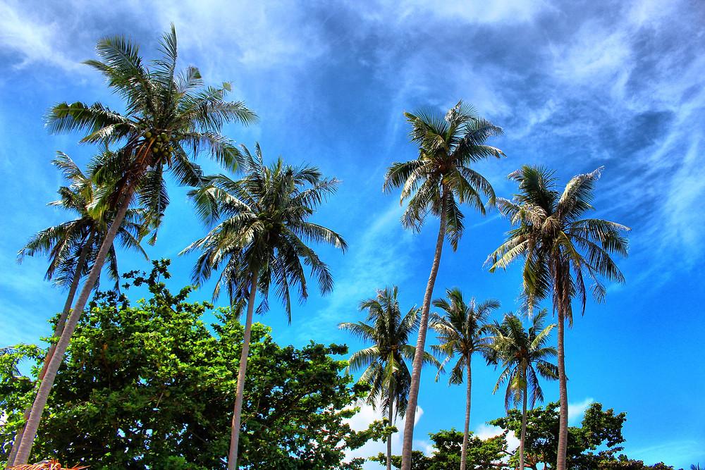décor polynésien