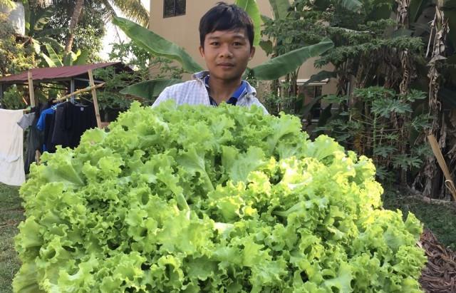 Siem Reap & Initiative : Un diplômé universitaire en agriculture lance une exploitation hydroponique