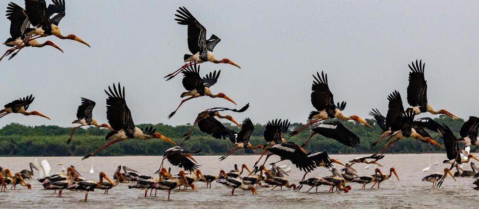 Cambodge & Nature : Pearaing, la biodiversité à vol d'oiseau