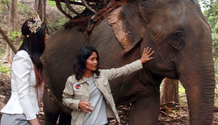 Chenda Clais, Pasionaria des éléphants