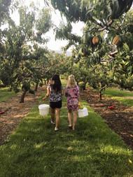 U Pick Orchards.jpg