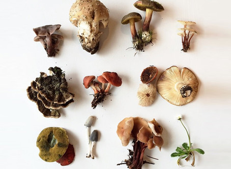 Medicinal Mushrooms :)