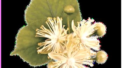 Lindenblütenhonig (1kg)