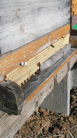 Die Bienensaison geht wieder los!