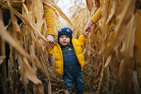 child walking though the corn field.jpg