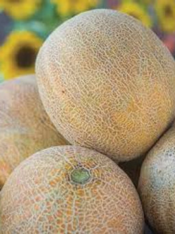 Cantaloupe-each