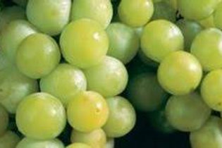 Niagra Grapes-Quart