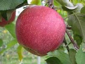 Cameo Apples - Quart