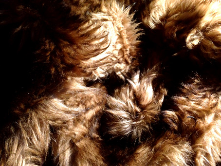 ON THE ANIMAL - Leather, Fur and Hair