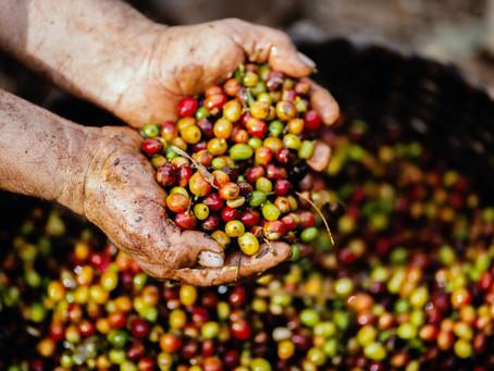 Шлях до кав'ярні: звідки в Україну їде кава і чи є різниця