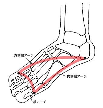 足の骨3.png