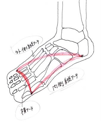 足の骨2.png