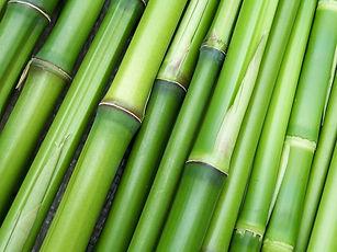 bamboo-240321_640.jpg