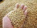 Produkte für Kraftfutterkonservierung
