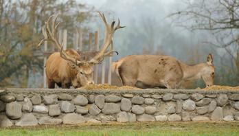 Impressionen vom Hirschpark