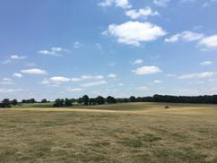 Hay Fields in Northern West Texas