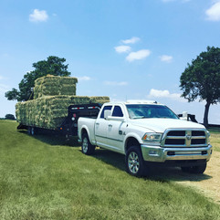 Hauling Square Bales of Hay