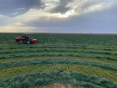Hesston Cutting Hay