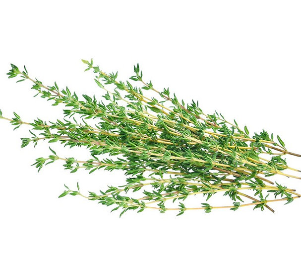 Thyme Oil - Red