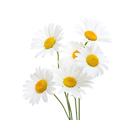 Chamomile (Oil & Extract)