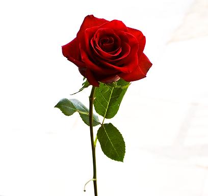 Rose Water - Organic