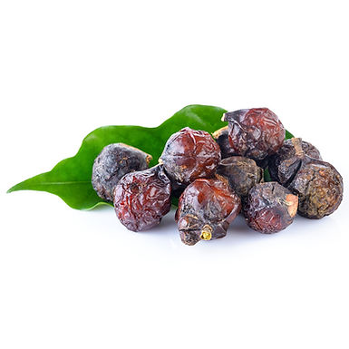 Soapnut Extract: White and Brown Extracts