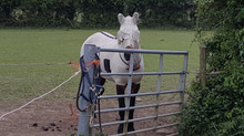 How to train your Human. Part 1. Ponies work for treats.