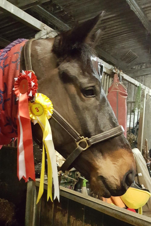 Dressage Winner Horse