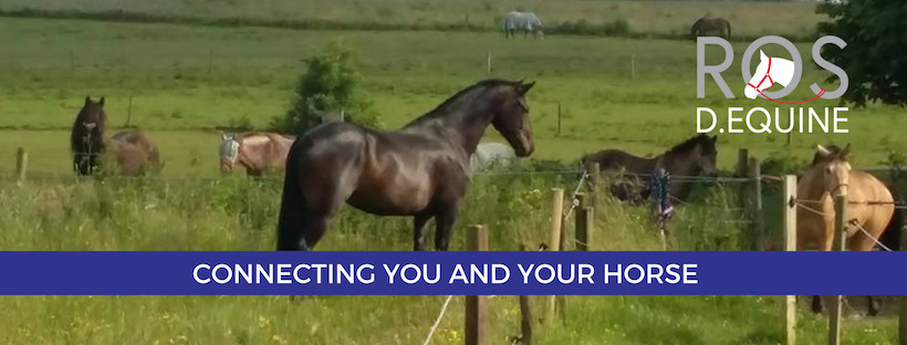 smart black horse with Ros D Equines logo and strapline 'connecting you and yor horse'