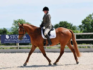 Dressage - what level do you compete your horse?