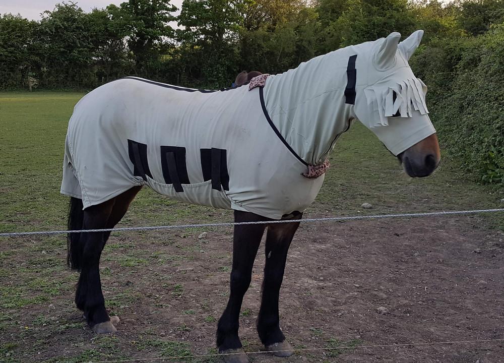 Pony Suggy Hoods