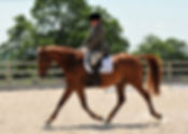 riding her horse in a dressage competition