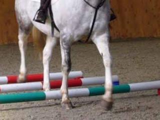 How do poles help my horse?