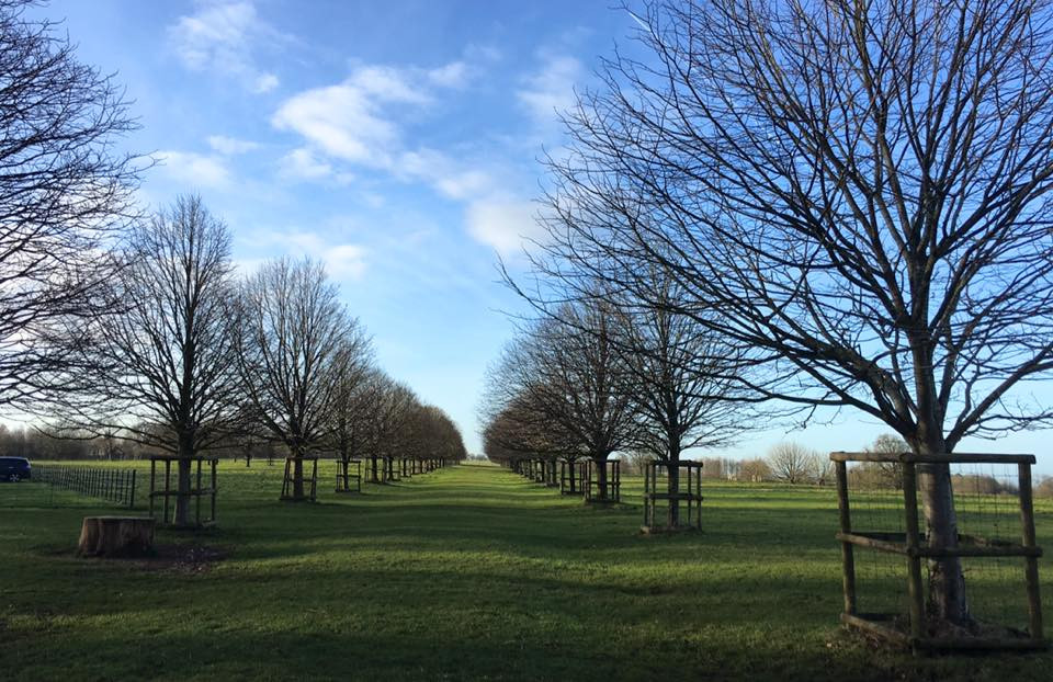 Avenue of trees in Dyrham Park