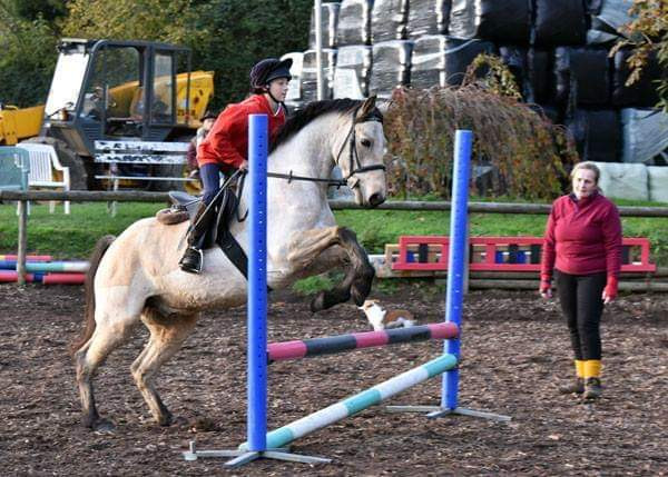 Dun pony jumping in a one to one coacjing session with Ros Dobson
