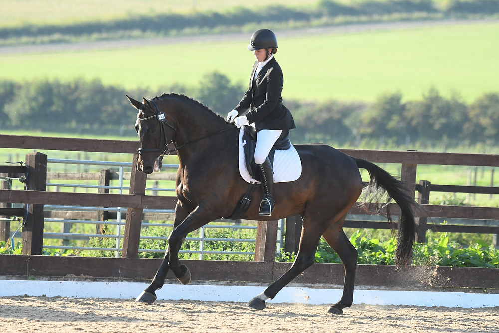 Dark Bay horse looking good  at the Sparsholt PetPlan Area Festival