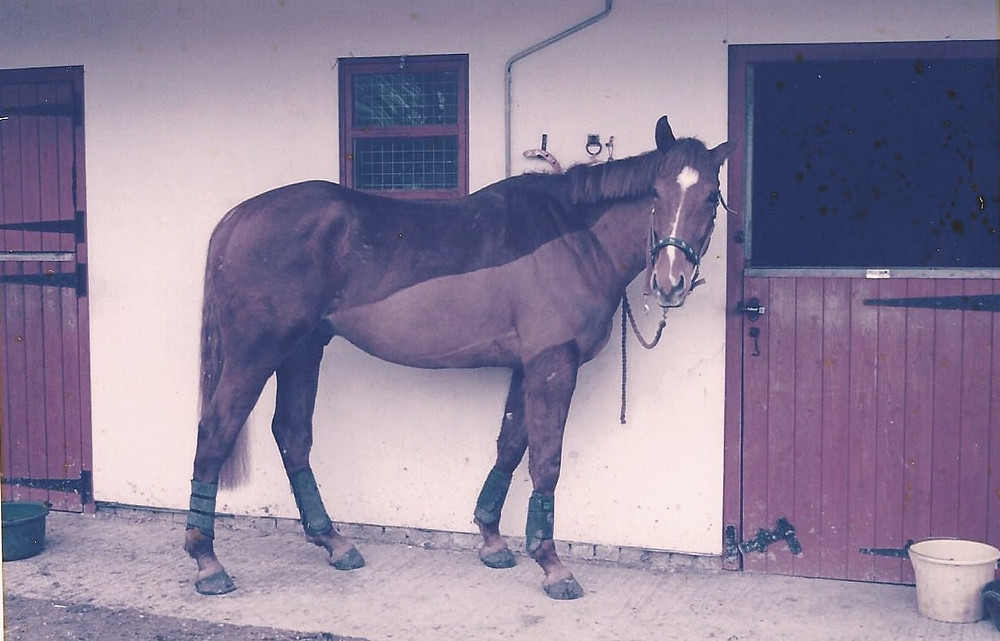 Rodney on the day he arrived in February 2005