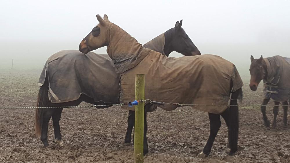 Horses Rugs