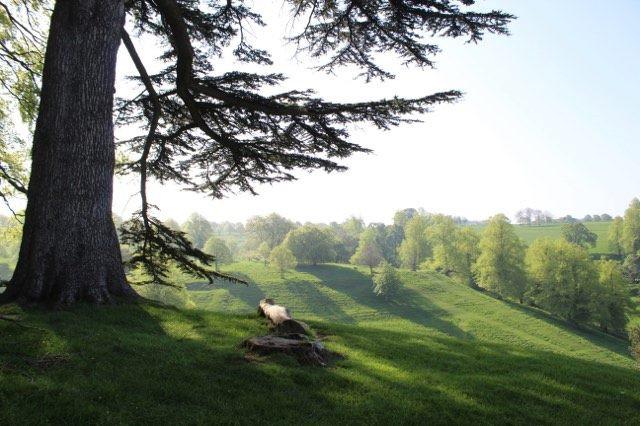 The Parkland around Dyrham Park in Wiltshire