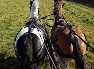 #EquestrianBlogtober Day 29: What Discipline would you like to try?