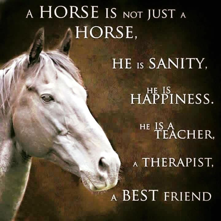 A horse is not just a horse, he is sanity, he is happiness, he is a teacher, a therapist, a best friend