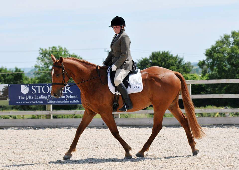 Shiny Chestnut dressage horse strutting his stuff in the arena