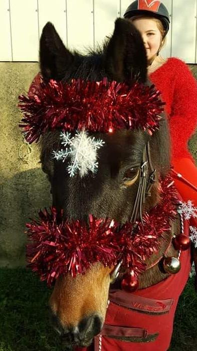 Pony in tinsel
