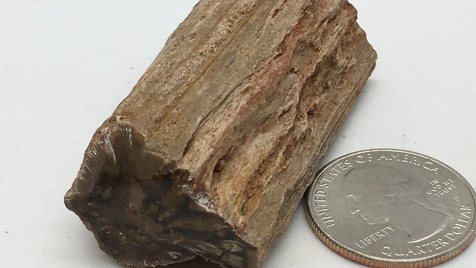 Petrified Wood Mini Log