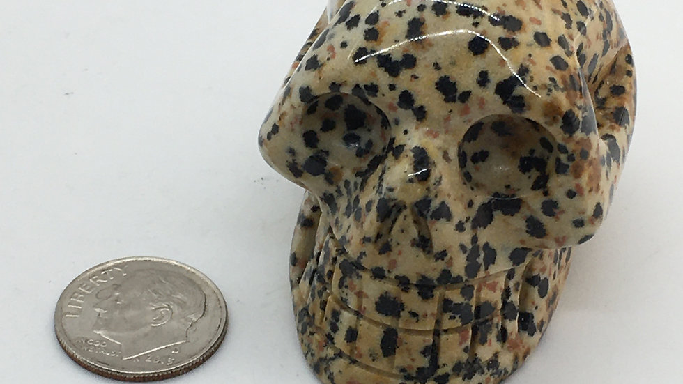 """Dalmation Jasper 2"""" Skull"""