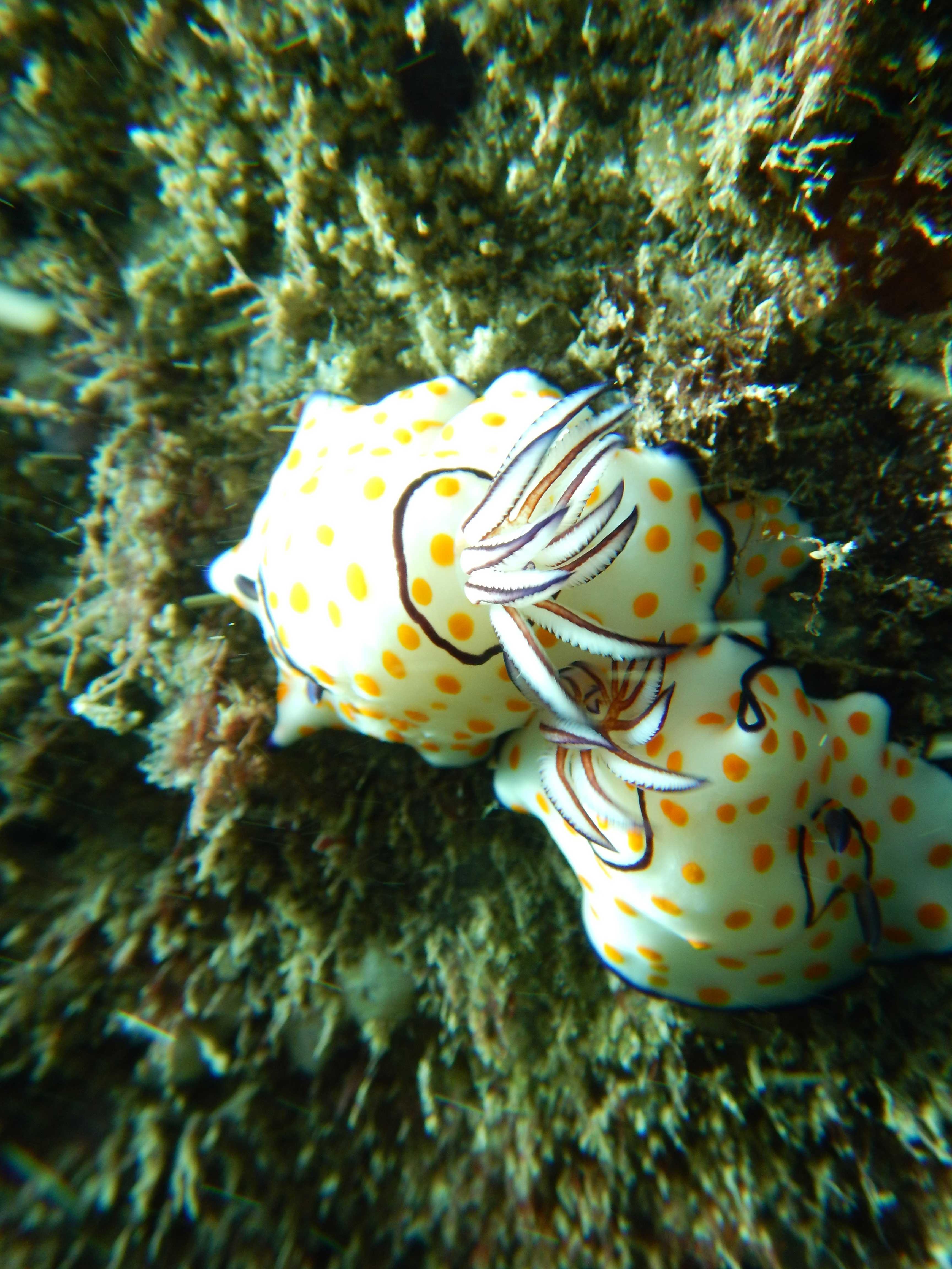 nudibranch-2018-low