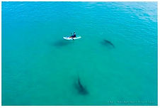 kayak shark 2019.jpg