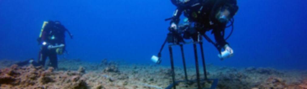 Tchernov marine biology