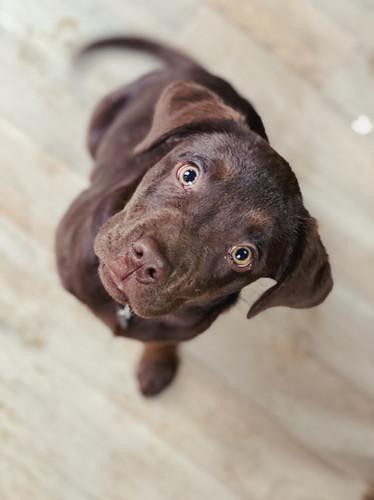 Puppy LOVE 😍